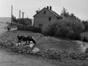 2 Scheurener Dorfweiher, Foto Naumann