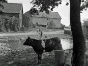 2a Scheurener Dorfweiher, Foto Naumann