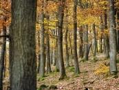 Eichenwald Herbst