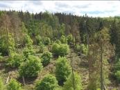 Luftbild Waldentwicklung_VTS Film