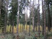 Borkenkäfer befallener Fichtenwald